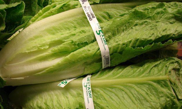 La alerta por el brote de E.coli en la lechuga romana, en 10 preguntas y respuestas